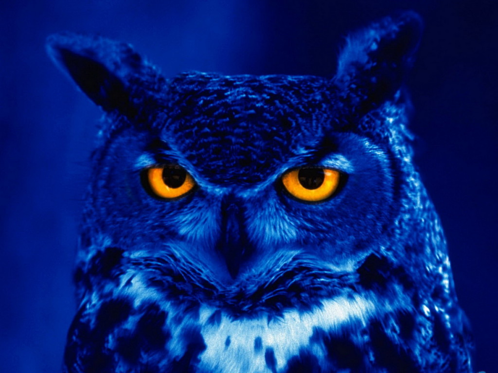 i am the night owl, i am nocturnal