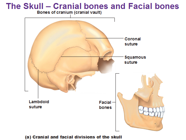 Congratulate, brilliant Nih crainial facial consider, that