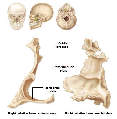 Geography of the Skull