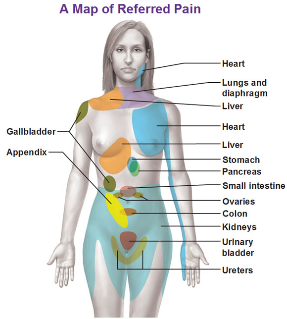 Abdomen Sites: Visceral Sensory Neurons And Referred Pain