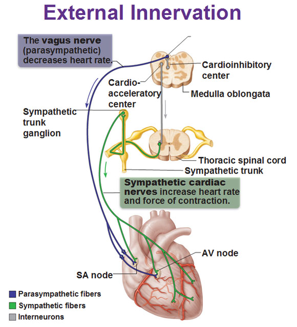 external sensory stimulation essay The process by which stimulation of a sensory receptor produces neural impulses that the brain interprets as a sound, visual image, odor, taste, pain, or other sensory image represents the first series of steps in processing of incoming information.