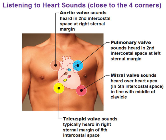 The four corners of the heart