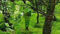 Mirror Statues in a Forest in Scotland