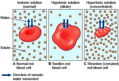 How does temperature affect osmosis