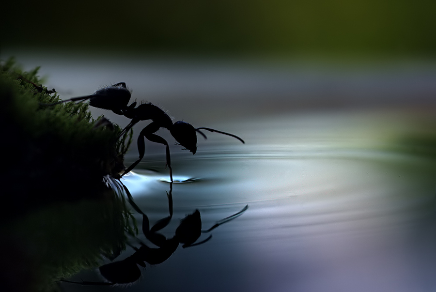 How Is Surface Tension Used In Nature