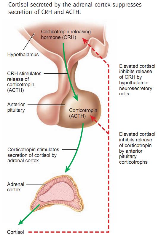 negative steroid side effects