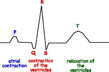 Pharmacology Of Cardiac Glycosides