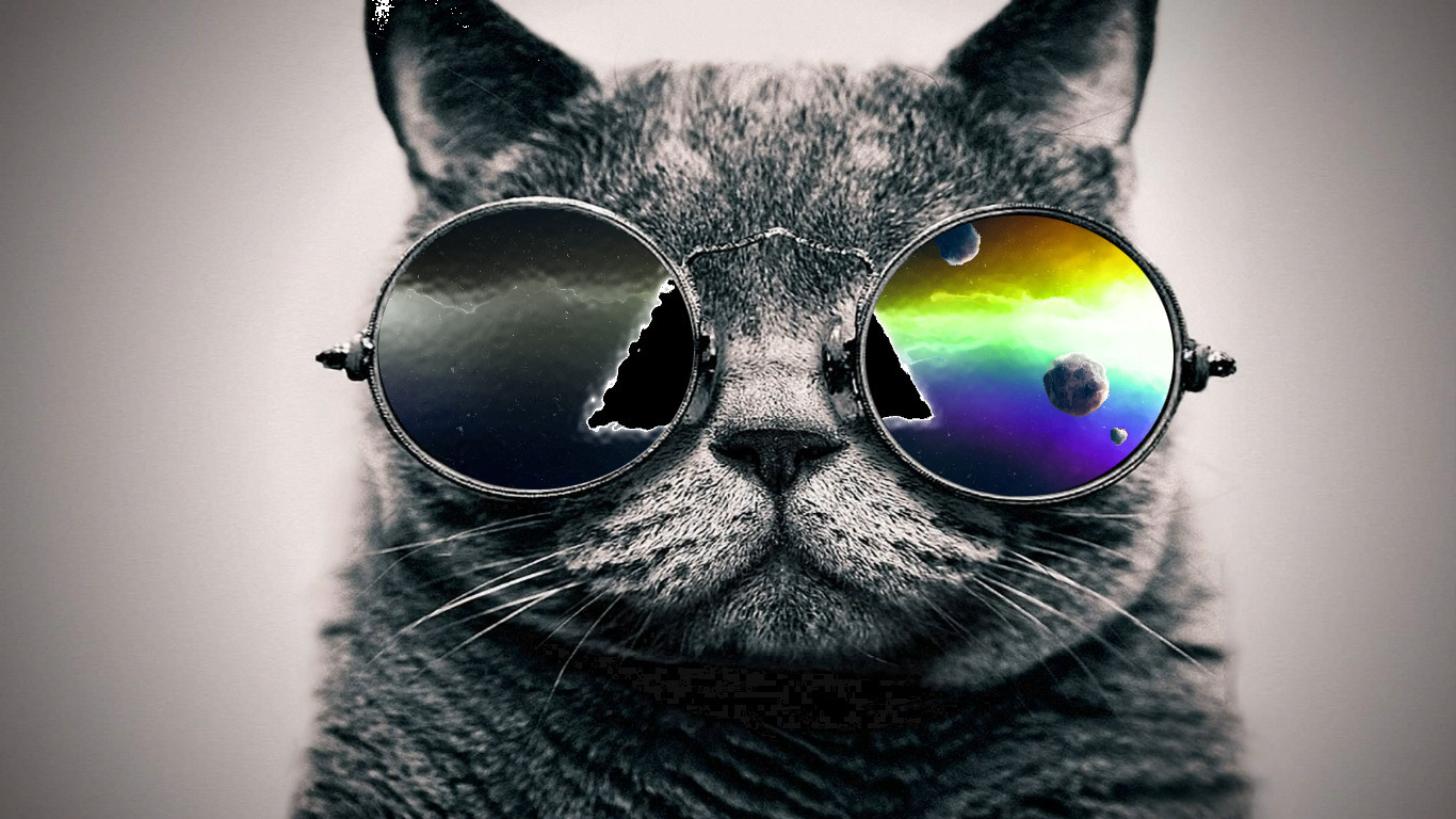 Http Galleryhip Com Cool Cat Pics Html