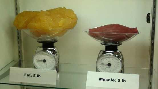 So if that's just 5 pounds of fat… Can you imagine how gross 20 pounds, or  50 pounds of fat looks like?