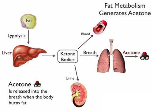 fat metabolism affects breath